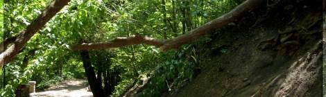 path under trees
