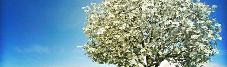 money tree in a field of green grass