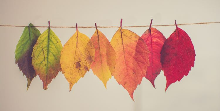 fall leaves in transition